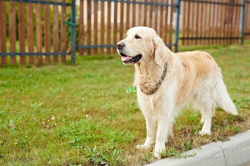 Avez-vous des conseils pour clôturer un jardin pour un chien ...