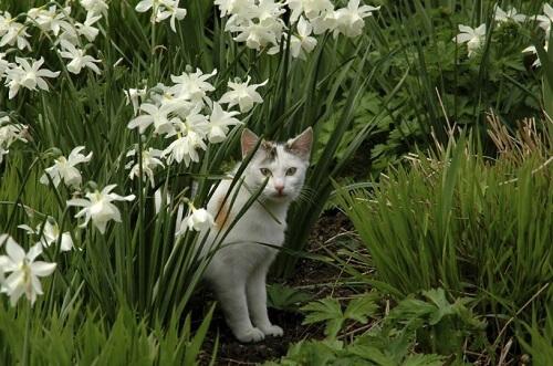 Quel r pulsif contre les chats utiliser pour les loigner du jardin entretien de jardin - Repulsif chat jardin naturel ...